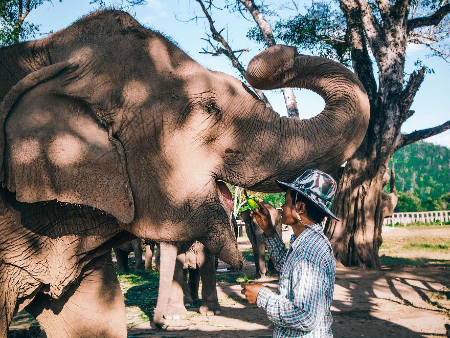 femfem-olifantenverblijf-olifanten