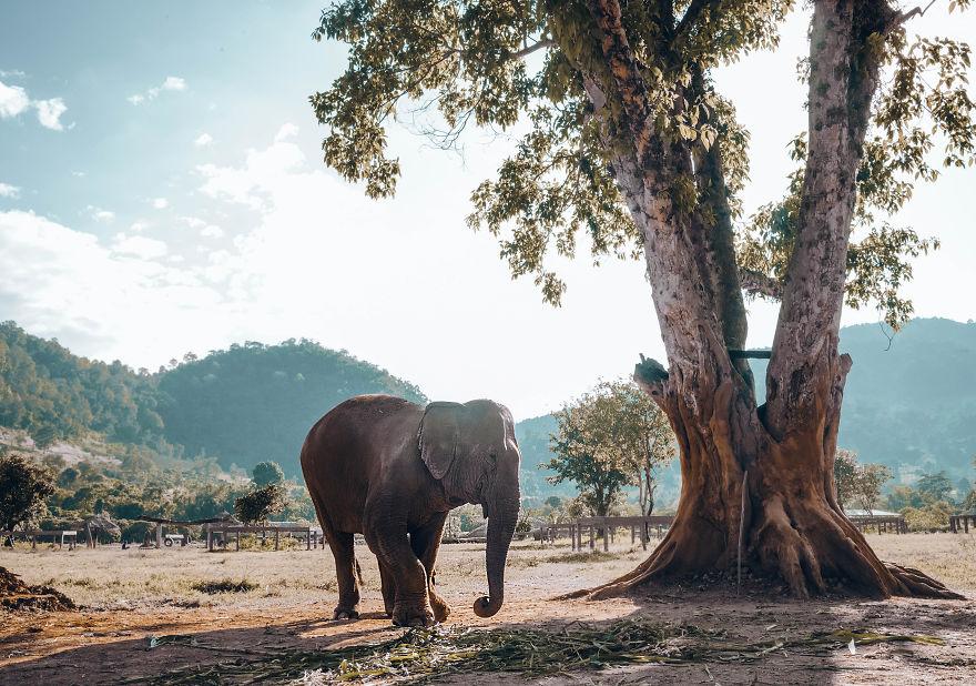 femfem-olifantenverblijf
