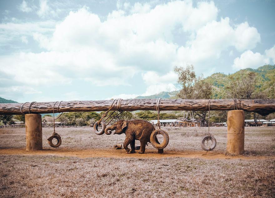 olifanten-olifantenverblijf-thailand-femfem