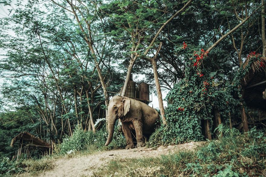 olifantenverblijf-femfem-olifanten