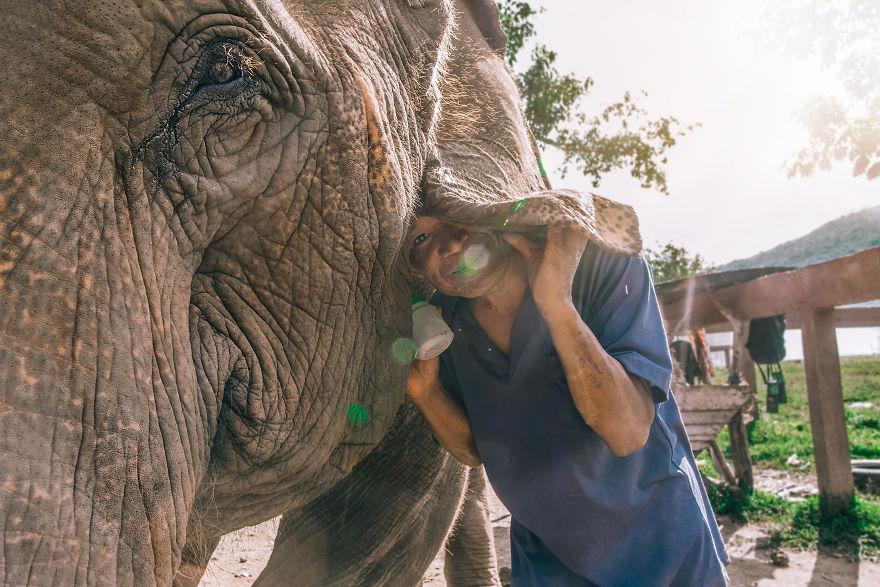 olifantenverblijf-olifanten-femfem