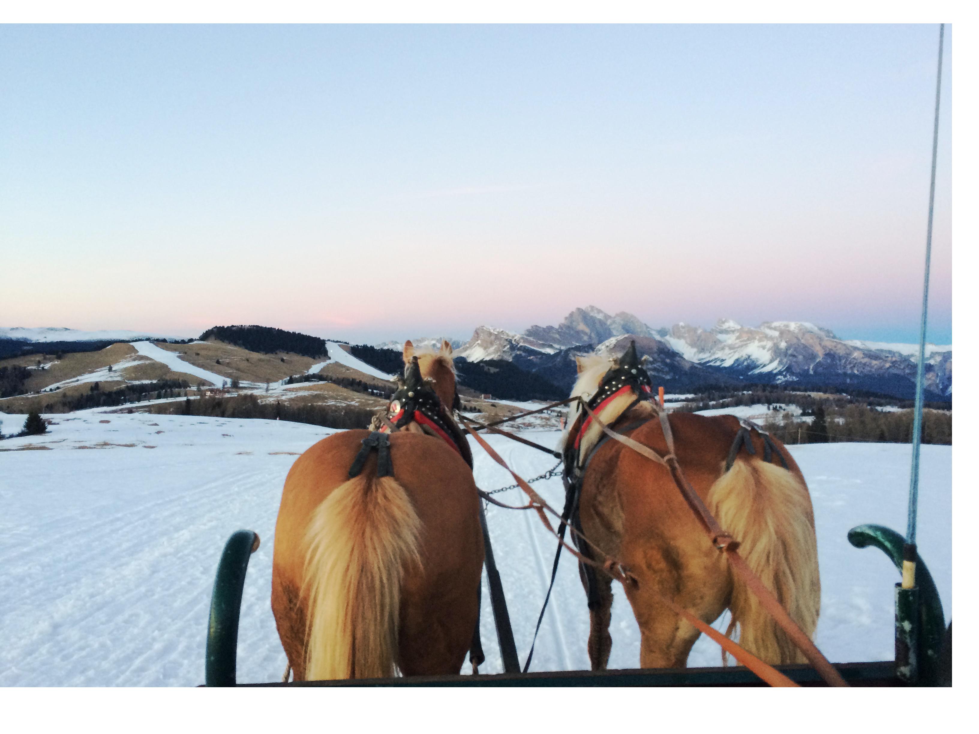 sudtirol-paardenslee-femfem