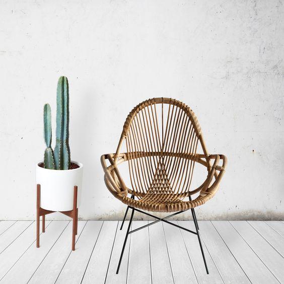 cactus-femfem-planten