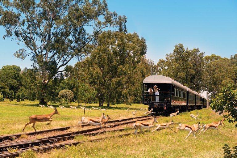 droomreis-afrika-trein