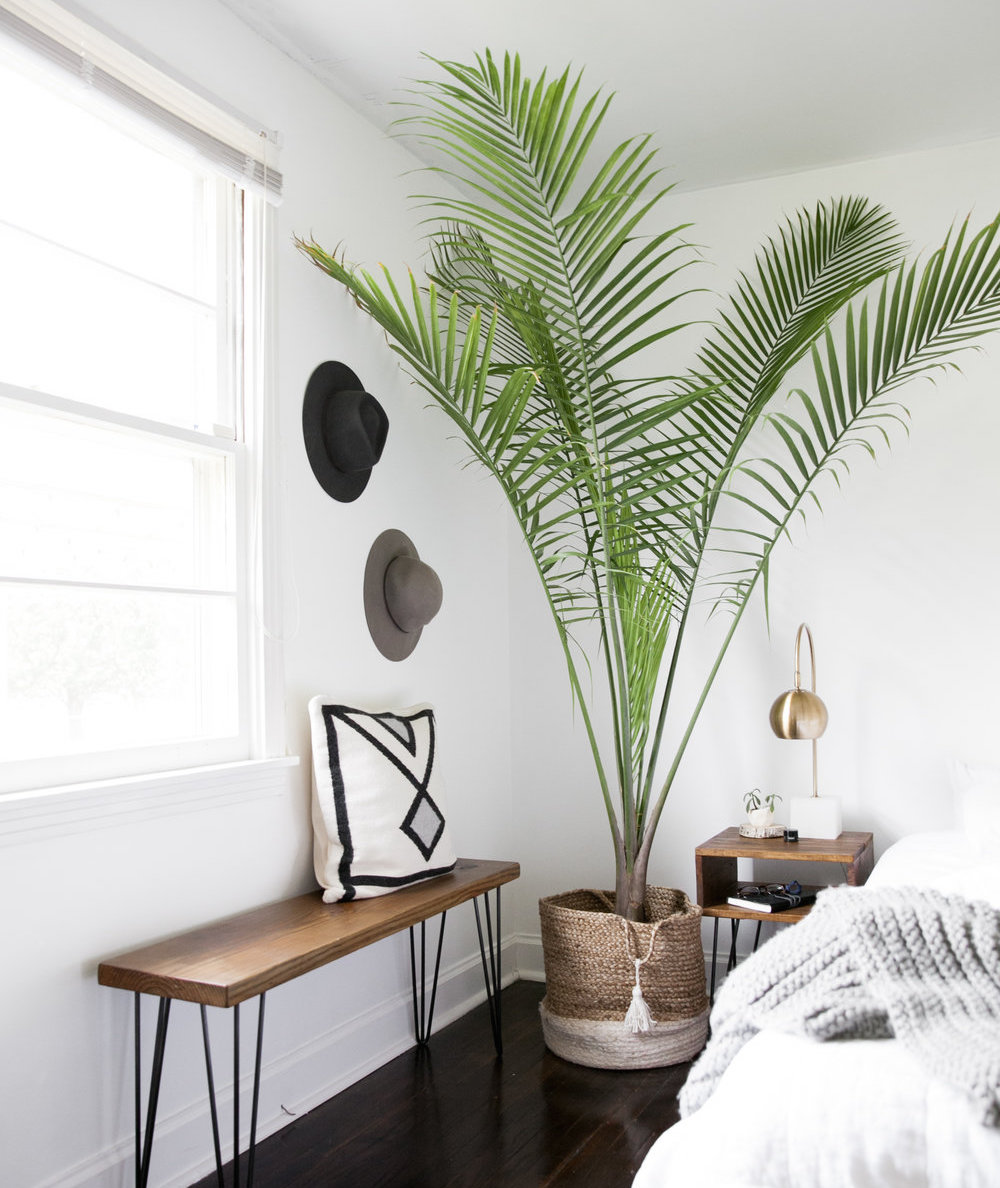 femfem-palm-planten