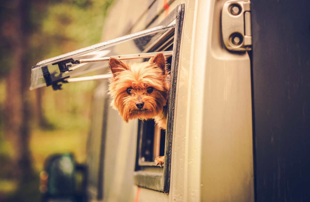 RV Travel with Dog