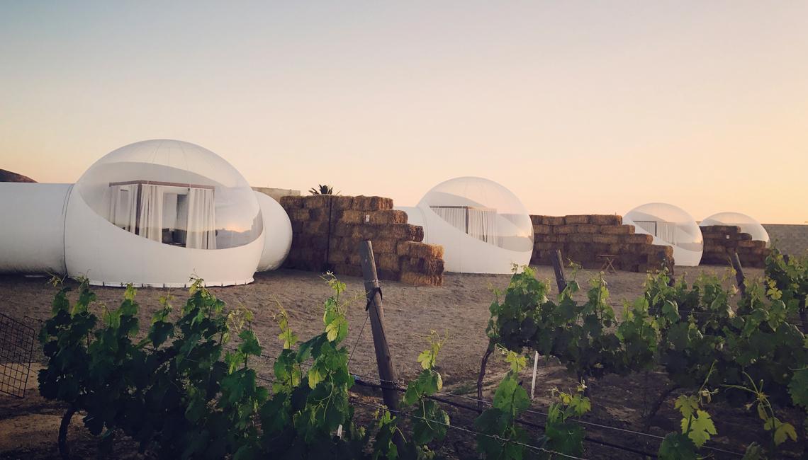 bubbels-tenten-wijngaard-FEMFEM