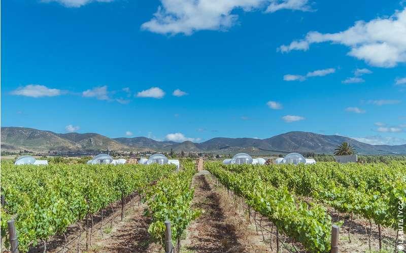 bubbeltenten-wijngaard-FEMFEM
