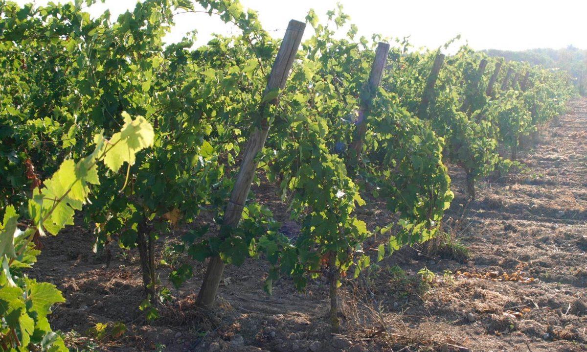 wijngaard-Loire-FEMFEM