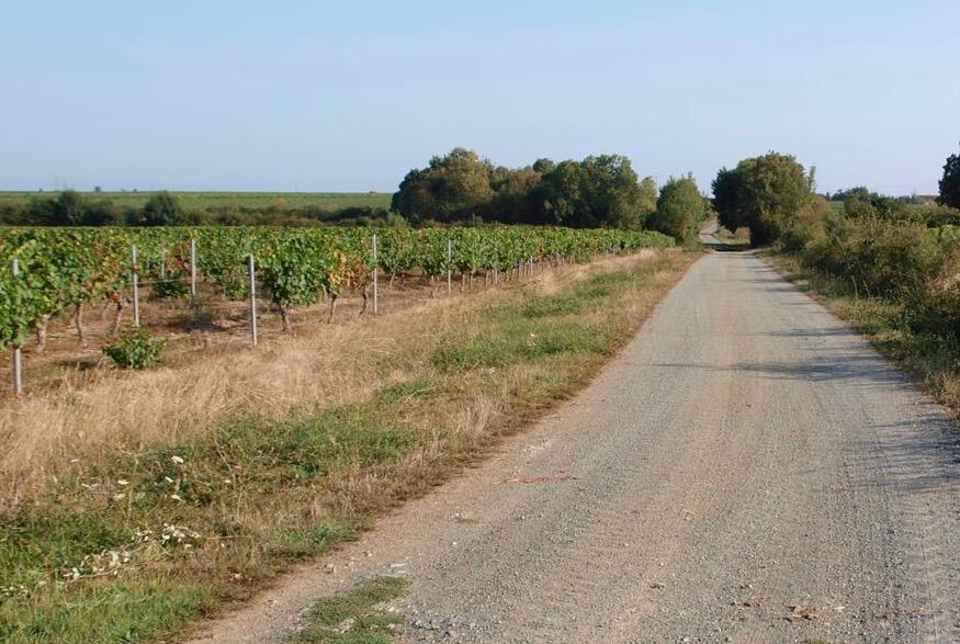 Wijngaarden-roadtrip-loire-FEMFEM