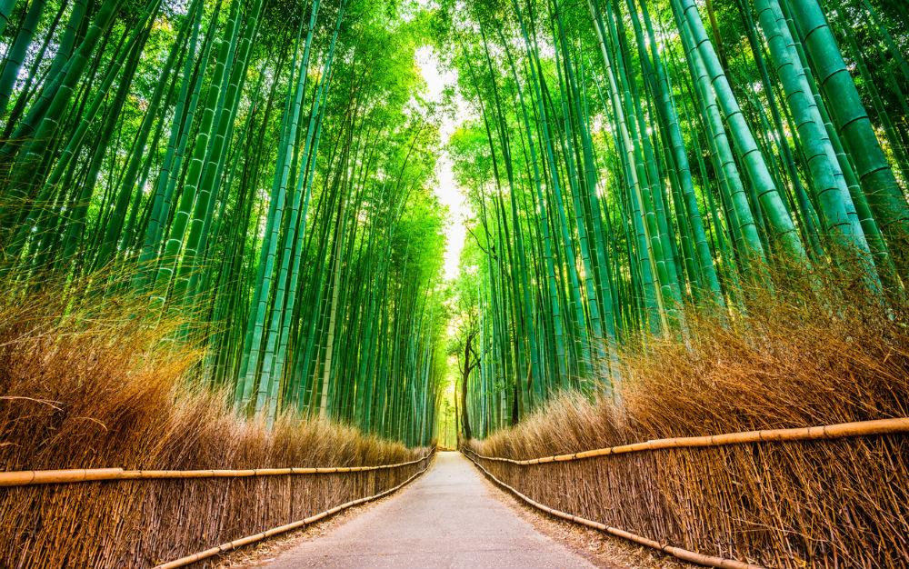bamboebos-kyoto-japan-femfem