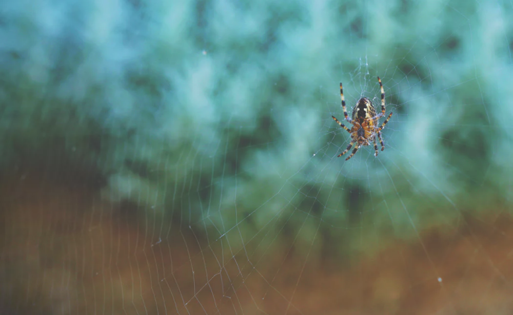 bang voor spinnen femfem