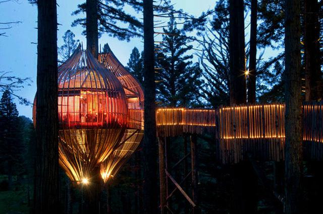 redwood treehouse FEMFEM
