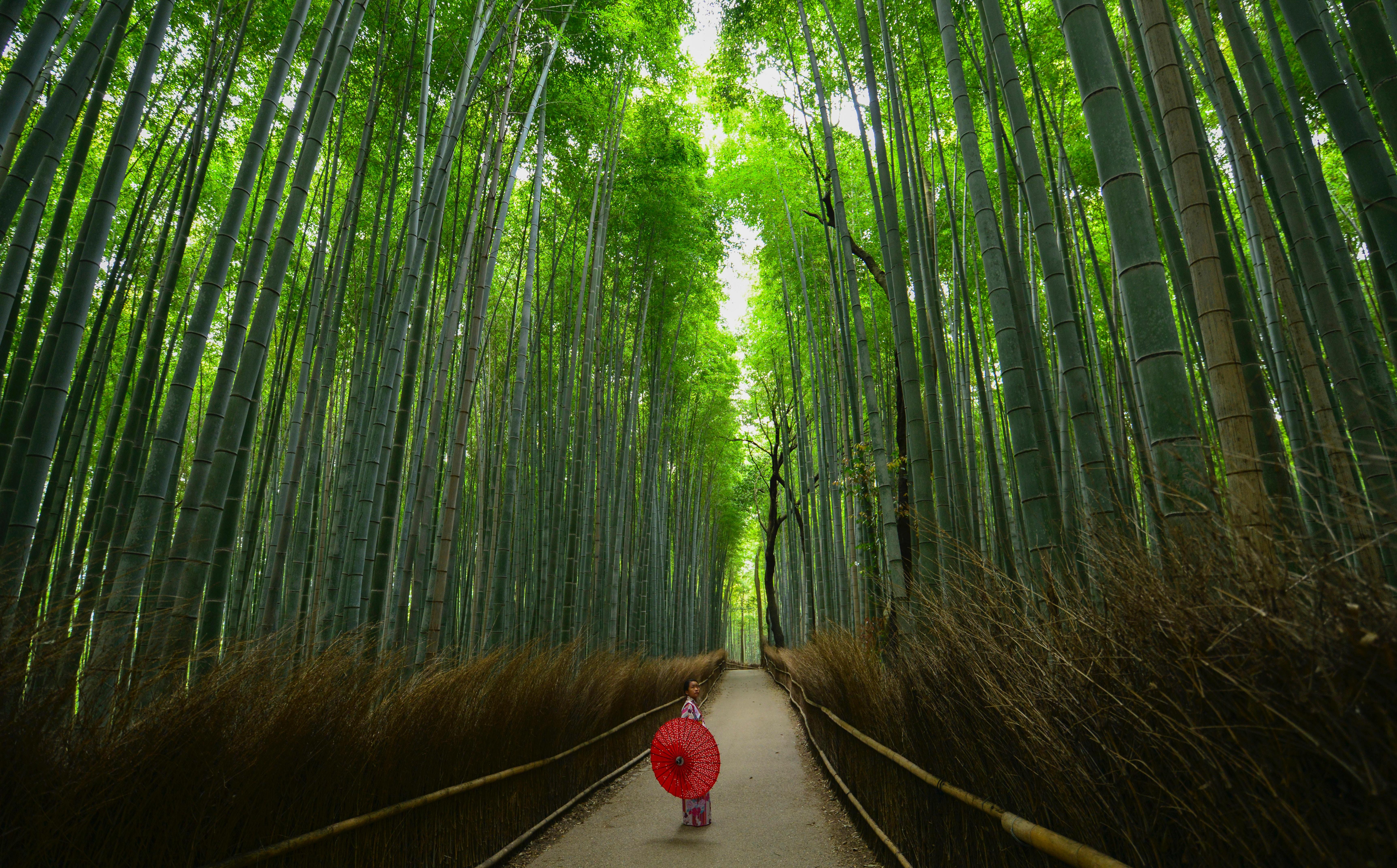 bamboebos-japan-femfem