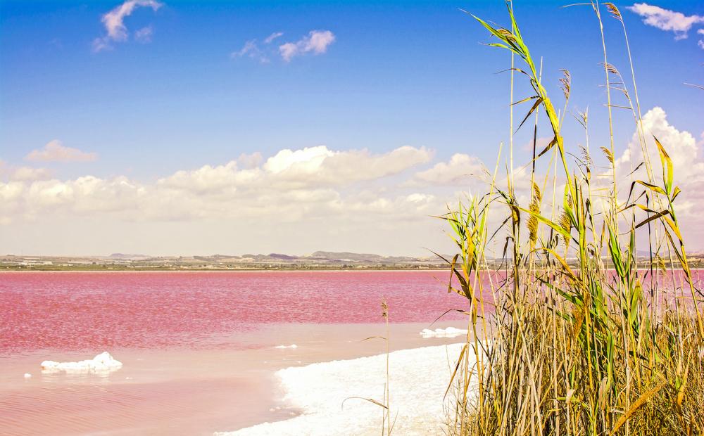 roze meer femfem