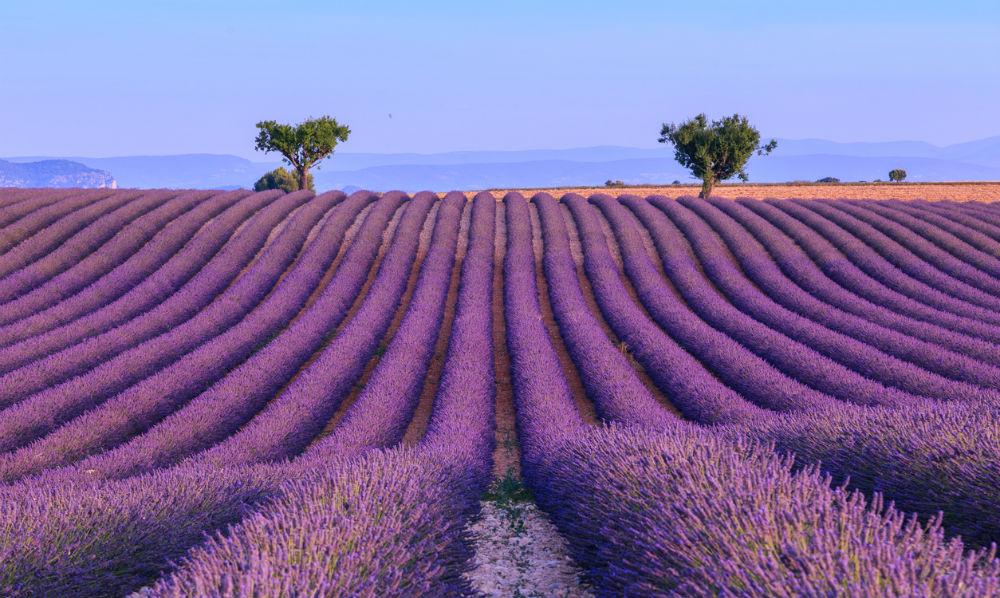 Lavender Fields frankrijk fem fem