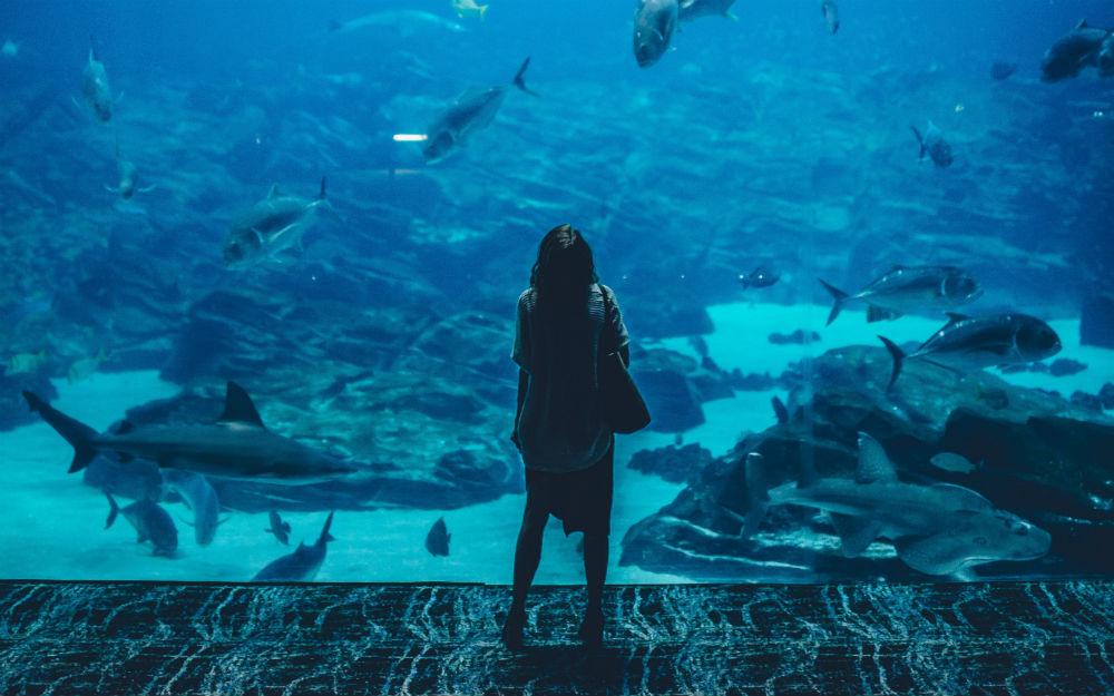onderwaterrestaurant FEM FEM