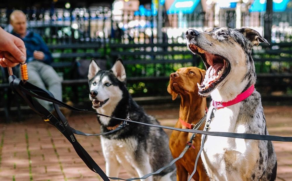 Honden FEMFEM