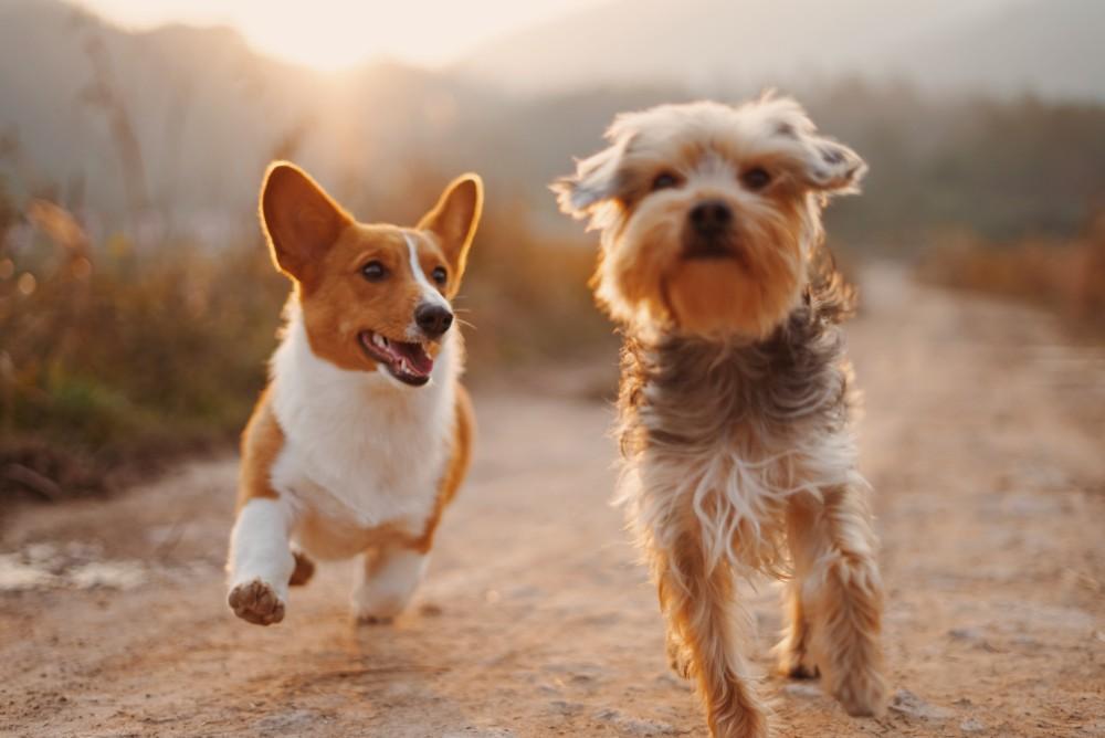 honden gezond FEM FEM