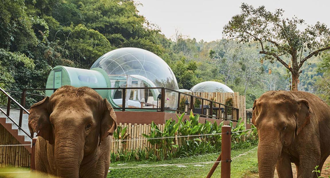 olifanten FEM FEM