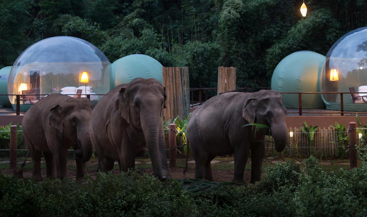olifanten FEMFEM