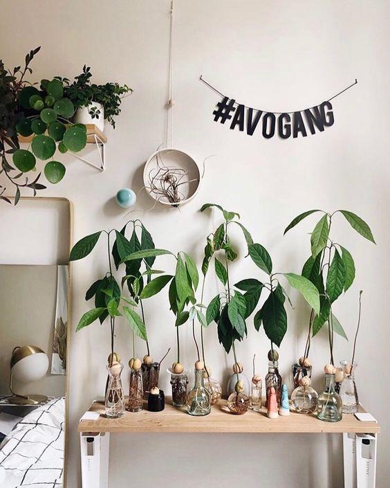 avocadoplant fem fem