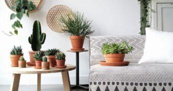 Waarom iedereen planten in huis moet hebben