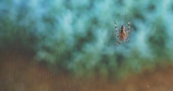 Bang voor spinnen? Het zit in je genen!