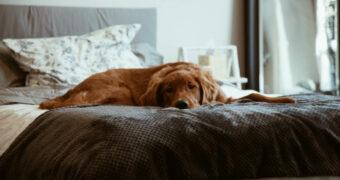 Je hond meenemen in de slaapkamer is beter voor je nachtrust