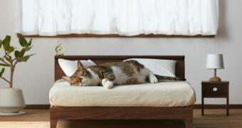 Deze mini-meubels gemaakt voor katten geven je kat een eigen huisje