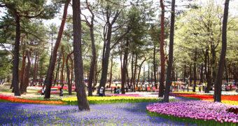 Maak kennis met het adembenemende Hitachi Seaside Park