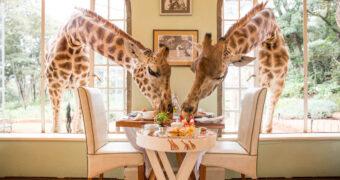 Dit zijn de meest bijzondere restaurants ter wereld