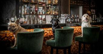 Deze cocktailbar voor honden is nét geopend