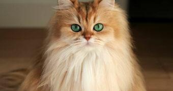 De katten Instagram accounts die kattenmensen moeten volgen