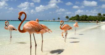 Vakantie naar Aruba geboekt? Hier moet je heen