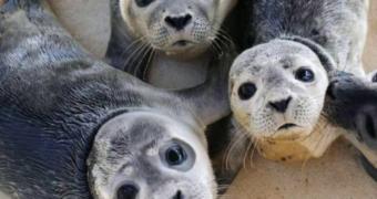 Droombaan: wonen op een eiland en zeehondjes verzorgen