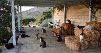 Job alert! Run je eigen kattenopvang op een eiland in Griekenland
