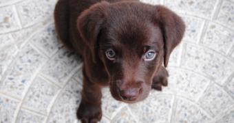 Dit wil je tijdens je tentamens: knuffelen met puppy's