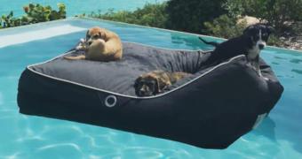 Op dit eiland kun je spelen en knuffelen met geredde hondjes