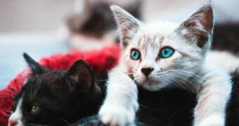 Speciaal voor alle kattenliefhebbers: het kattigste memoryspel