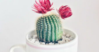 De interieurtrend van het moment: de roze kamerplant