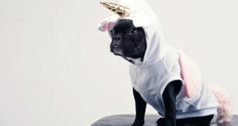Primark lanceert hilarische pakjes voor je hond als je dol bent op een verkleedpartij