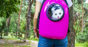 10 x de beste cat backpacks