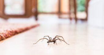 Fabels ontsmaskerd: eten we spinnen in onze slaap?