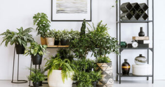planten verzorgen huis FEM FEM