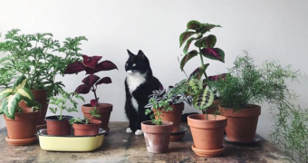 @cats_with_plants