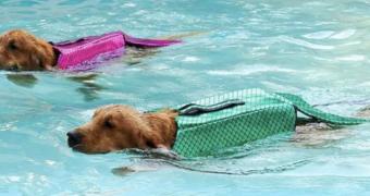 hond zeemeermin